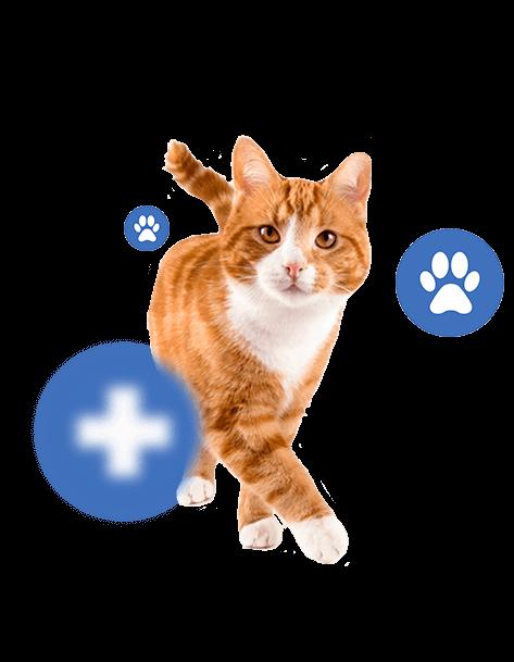 Лечение и профилактика  заболеваний кошек
