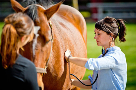 Хронический-обструктивный-бронхит-у-лошадей