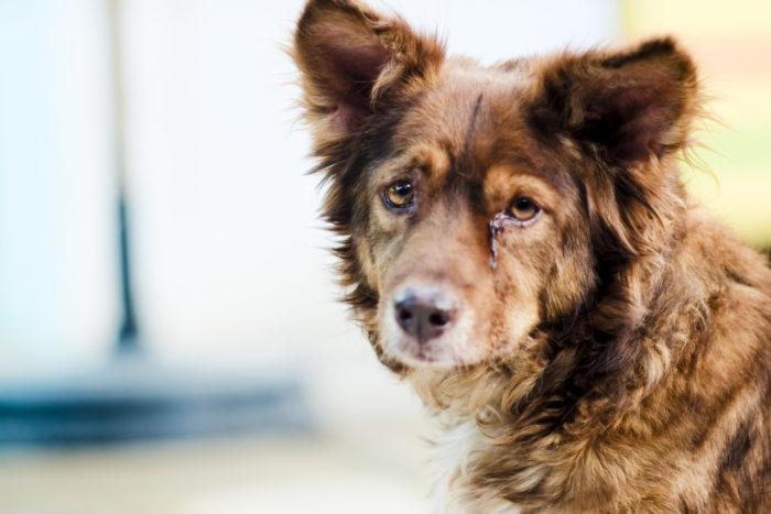 Коронавирусный и ротавирусный энтерит собак