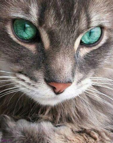 Домашняя диагностика внутренних болезней, ветеринарная офтальмология