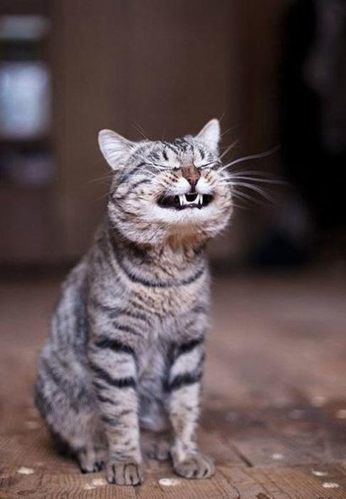 Инфекционные заболевания кошек и ветеринарная стоматология
