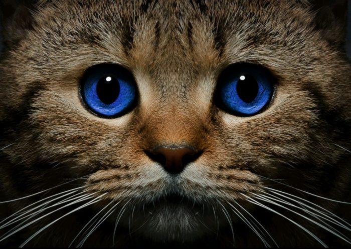 Экспертиза кошек. Окрасы кошек. Вирусные заболевания кошек