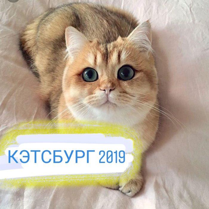 КЭТСБУРГ 2019