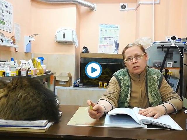 """ветеринарная поликлиника """"Mercy"""