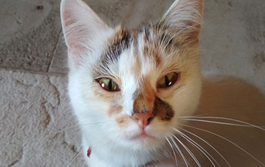 Хламидиоз-у-кошек-лечение