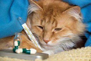 Вирусная-лейкемия-кошек