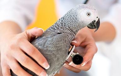 Эффективность Форвет при лечении бактериальных и паразитарных заболеваний птиц